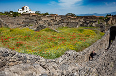 Flowers in ruins (alfsan) Tags: ruins flowers walls archaeology archeologia mura rovine fiori scavi escavations chiesa church