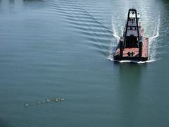 _DSC4396 (don_brubeck) Tags: tugboat duwamish ducks