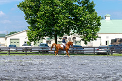 Centered (HelwigPhotos) Tags: horse riding jump jumping woman happy sunny sports equestrian fence chestnut arabian tree pennsylvania barrel show champion action trailer travel shiny clean wash