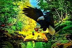 THE EAGLE WISDOM. (Viktor Manuel 990.) Tags: eagle aguila water agua forest bosque book libro composition composición digitalpainting pinturadigital querétaro méxico victormanuelgómezg rocks rocas