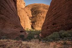 Kata Tjuta_Valley of Winds-4046 (Man-Zhi) Tags: katatjuta ulurukatatjutanationalpark walkingtrack valleyofwinds australia northernterritory outbackaustralia nature monolith trees wind valley