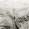 (Attila Pasek) Tags: grass sfx bronicasqa mediumformat 6x6 bw longexposuretime film longexposure analogue infrared hoya camera blackandwhite filter 200 ilford wind 120film