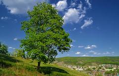 Overlook by the mapleside (МирославСтаменов) Tags: russia zhiguli zhigulevsk slope tree maple overlook ridge cloudscape sky