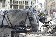 Fiaker (Gerard Stolk ( vers le toussaint)) Tags: wenen wien paarden hoofdstel paardenkoets