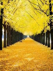 Forêt nature4 (CISSÉO) Tags: forêt arbres bois nature jaune