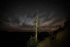 colorized-3304 (stevea2453) Tags: brycecanyon milkyway nightsky