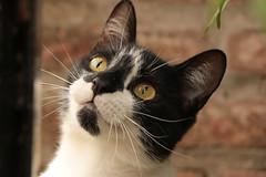 Miti Miti (Marina Membibre) Tags: cat mew occhi gatti eyes canon eos 70d