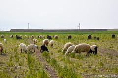 20180331-_DSC0377.jpg (drs.sarajevo) Tags: farsprovince ruraliran iran arsanjan