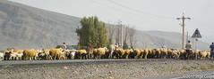 20180331-_DSC0385.jpg (drs.sarajevo) Tags: farsprovince ruraliran iran arsanjan