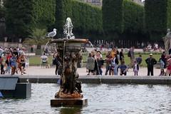 Un domingo en París (Ce Rey) Tags: gaviota seagull jardinesdeluxemburgo paris gente street bird ave fuente fountain agua leisure