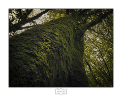 En el bosque III/ Into the woods III (Jose Antonio. 62) Tags: spain españa asturias trees arboles naturaleza nature green verde