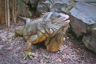 lizard smile :)