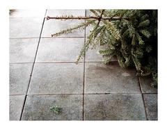 HPIM2423 (Jordane Prestrot) Tags: jordaneprestrot sapin christmastree árboldenavidad ♑
