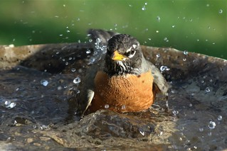 Splashin' Bath Time