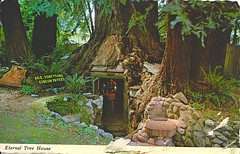 08 Mischelina (Rocky's Postcards) Tags: redwood tree shelter eternaltree house redcrest ca california postcard vintage mischelina