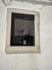 Cats Of Loulé (kutzz) Tags: portugal lisbon algavre sines loule atlantic ocean sea smmer sky warm blue yello white trip travel vacation