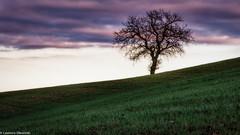 Alberello (SDB79) Tags: albero nuvole campagna ururi molise natura paesaggio