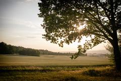 (kly420) Tags: img02401 kly420 2018 erzgebirge haamit baum silouette feld wald wiese sonnenuntergang sonnenstrahlen landschaft sunset field tree light sun peaceful friedlich erholung