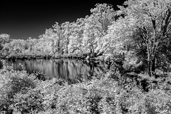 Wetlands Pond 2 IR (Neal3K) Tags: henrycountyga georgia ir infraredcamera kolarivisionmodifiedcamera pond reflections trees white foilage