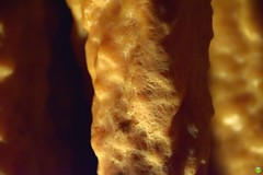 Demänovská Cave of Liberty (petrOlly) Tags: europe europa slovensko slowakei slovakia słowacja sk2018 nature natura przyroda cave jaskinia demänovskácaveofliberty demänovskájaskyňaslobody macro