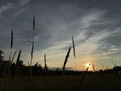 First Day of Summer 9397 (newspaper_guy Mike Orazzi) Tags: photostream summer firstdayofsummer iphone hay grass sky sunset sun fieldofgrass litchfield ct clouds
