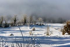 Clouds Crawl Uphill (Bephep2010) Tags: 2017 77 alpha bäume landschaft sal50m28 slta77v schnee schweiz sony switzerland wald winter wolken zug zugerberg clouds forest landscape snow trees weiss white ch