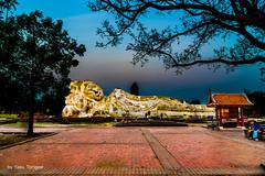 Phra Buddha Sai Ayutthaya Thailand-7a (Yasu Torigoe) Tags: thailand travel sony a99ii asia ayutthaya ancient