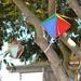 Inclusão Arraial do CRAS Nação Cidadã 20 06 18 Foto Beatriz Nunes (16)