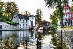 Bruges (Belgium) (Jante01) Tags: bruges brugge belgie belgium hdr zwaan