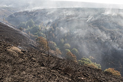 Saddleworth Moor Fire - 1 Week After (Cowbury Dale) (Craig Hannah) Tags: saddleworth saddleworthmoor fire uplands moorland smoke greenfield buckton vale pennine westriding yorkshire oldham greatermanchester england uk devastating aftermath craighannah july 2018 chewvalley dovestones carrbrook trees valley burnt scorched