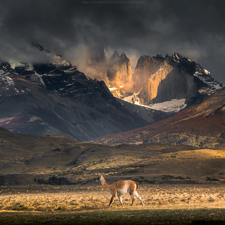 Guanaco and the lost tower
