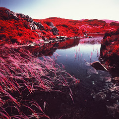 Dock Tarn (Mark Rowell) Tags: infrared ir eir aerochrome kodak hasselblad 903 swc 6x6 120 mediumformat expired cumbria lakedistrict uk docktarn film