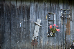 old barn wall (Rambynas) Tags: lithuania lietuva stagariai old barn wall