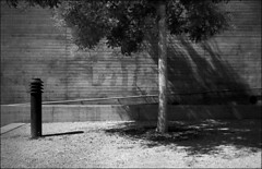 als baum fänd ich´s kacke da (fluffisch) Tags: fluffisch darmstadt leica leicam6 summiluxm35f14 preasph summilux 35mm f14 rangefinder messsucher analog film cms20 staatstheater adox