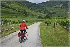 Radeln durch die Wachau / Cycling through the Wachau (Runemaker) Tags: bicycling patricia cycling radeln radfahren woman frau bicycle bike fahrrad wachau weinbau vineyard road street strase austria österreich donauradweg danubebicyclepath route trail weg danube donau