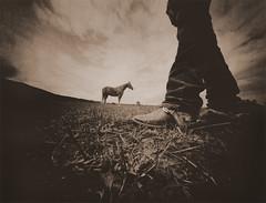 The Whisperer (micalngelo) Tags: analog filmphoto pinhole pinholecamera realitysosubtlepinhole realitysosubtle4x5pionholecamera trixfilm toycamera toycameraphotography lomography alternativeprocess alternativephotography lithprocess lithprint montana horse horsewhisperer