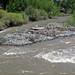 Greybull River (Meeteetse, Wyoming, USA) 5
