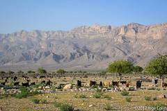 20180330-_DSC0208.jpg (drs.sarajevo) Tags: sarvestan ruraliran iran nomads farsprovince chamsatribe