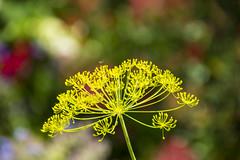 Bokeh 260618-2 (martinritter1) Tags: pflanze natur bokeh