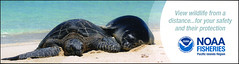 ephemera - NOAA bookmark (Jassy-50) Tags: ephemera bookmark noaa animal turtle seal sealife nationaloceanicandatmosphericadministration tortoise