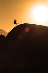 Free (alestaleiro) Tags: free libertad libre livre flight fly vuelo volar ave pájaro bird silhouette silueta wings alas asas controluce contraluz compo estaleiro estaleirovillage estaleirobeach praia praiadoestaleiro morning sunri amanecer alejandroolivera alejandrooliveraphotography alestaleiro