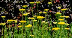Helmsley Walled Garden (alh1) Tags: helmsleywalledgarden england yorkshire ryedale