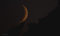 New moon (pix-spotting) Tags: moon newmoon lunar summer evening night