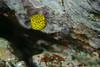 20180714-DSC_0705.jpg (d3_plus) Tags: 南伊豆 southizu drive fish port apnea closeuplens 晴れ 1030mm fishingport 海岸 景色 ニコン1 watersports sky マリンスポーツ ニコン 素潜り ウォータープルーフケース 静岡 nikon1j4 漁港 2781mm 海 地形 scenery イノン ズーム nikon1 1nikkorvr1030mmf3556pdzoom fineday landscape nature izu sea j4 underwater skindiving wpn3 inonucl165m67 japan 静岡県 nikonwpn3 macrolens 水中 クローズアップレンズ 自然 風景 waterproofcase スキンダイビング ビーチ マクロ 生物 animal snorkeling marinesports ucl165m67 beach diving 魚 息こらえ潜水 fine 1030mmpd inon 空 日本 伊豆 shizuoka シュノーケリング macro
