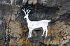 White Stag at Bamburgh Beach (mikedenton19) Tags: stag rocks stagrocks painted paint art bamburgh beach northumberland bamburghbeach bea coast