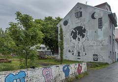 Iceland's Street Art (acase1968) Tags: reykjavik iceland mural graffiti nikon d750 nikkor 24120mm f4g street art