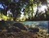 Sespe Swimming (Nathan Wickstrum) Tags: lospadresnationalforest sespe wilderness creek swimmnig hole nathanwickstrum