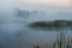 7h du mat (joboss83) Tags: fuji landscape paysage brouillard xt1 france provence var ete mist pond lake landschaft nebel lak groupenuagesetciel