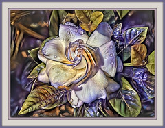 Nature's music is never over; her silences are pauses, not conclusions. (Mary Webb) (boeckli) Tags: garden garten gardenia plants plant pflanzen rain raindrops regentropfen tropfen wassertropfen painterly photoborder ddg deepdreamgenerator pastel pastell purple lila