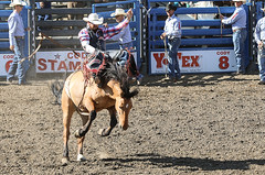 Bareback Bronc Rider (wyojones) Tags: wyoming codystampederodeo cody cowboy horse barebackbroncriding mane hair hat buck chaps boots saddle man ride rodeo wyojones